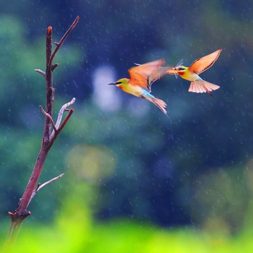 Love Birds Wallpapers Hd Quotes And Art Pictures By Steve Chang