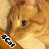 Vogeljagd Spiel für Ihre Katzen (Game4Cats)