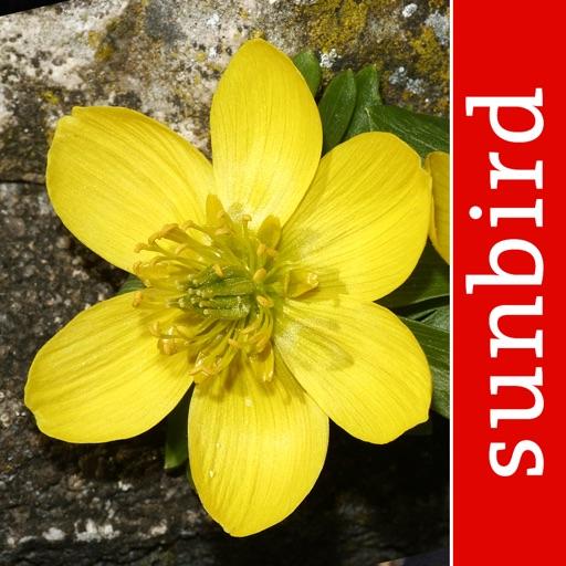 Blütenpflanzen Deutschland Blumen, Sträucher Bäume