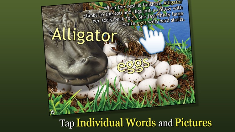 Alligator at Saw Grass Road - Smithsonian's screenshot-2