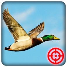 Activities of Duck Hunting Season: Wild Bird Shooting 3D
