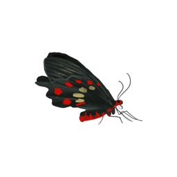 Insect Package stickers by Hasan