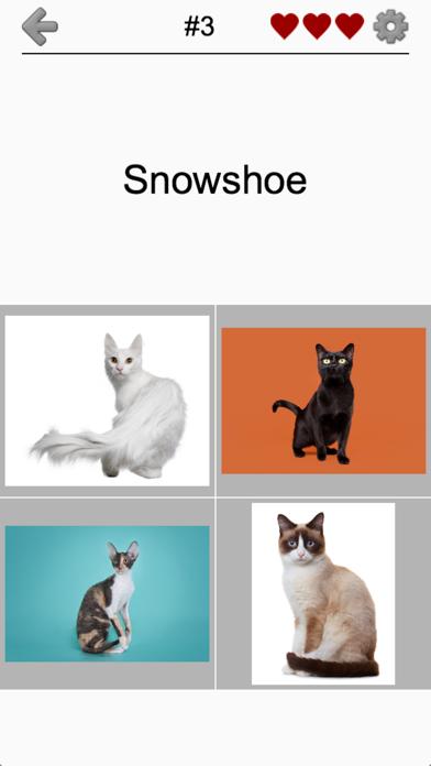 Cats Quiz - Guess Photos of All Popular Cat Breeds screenshot 2