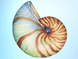 Beach Lover Sea Shells Sticker Pack