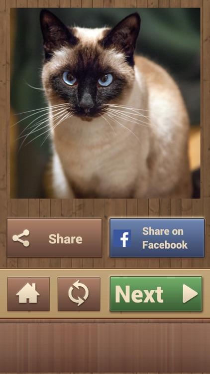 Cat Jigsaw Puzzles screenshot-4
