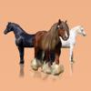 Horse Breeds: A Bible of Horses