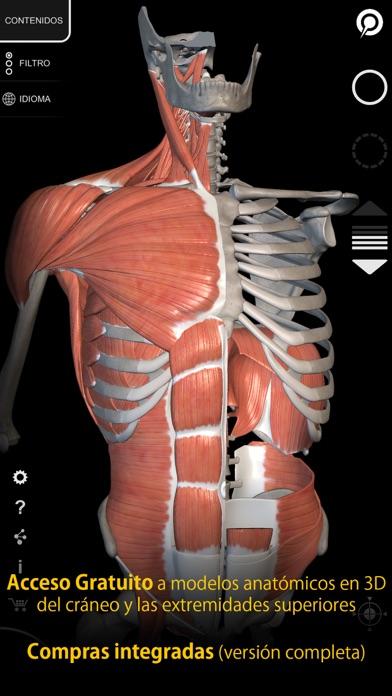 Músculos Esqueleto - Anatomía App Revisión - Medical - Apps Rankings!