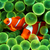 Fish Pictures – Fish Wallpapers & Backgrounds