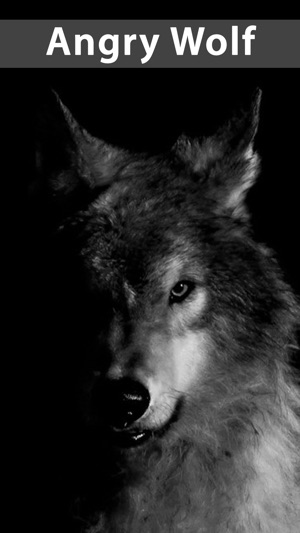 Amazing Wolf Wallpapers On The App Store