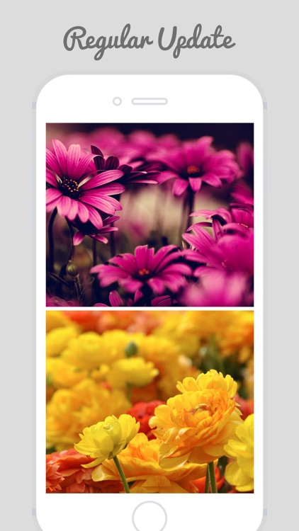 HD Flower Wallz - Flowers for Home & Lock Screens screenshot-3