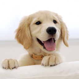Cute Puppies animal Wallpapers, photos and Images