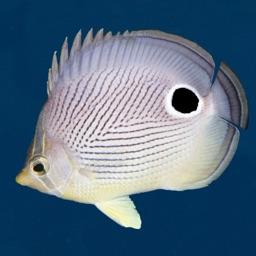 Easy Fish ID Caribbean