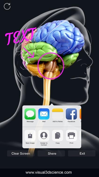 My Brain Anatomy screenshot-5