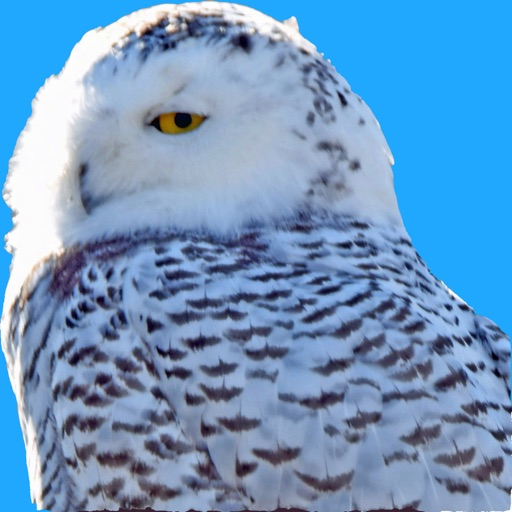 Big Year Birding ABA