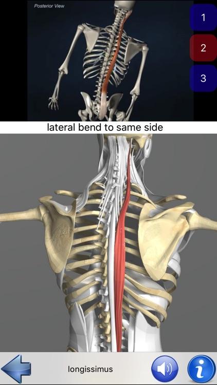 Visual Anatomy screenshot-1