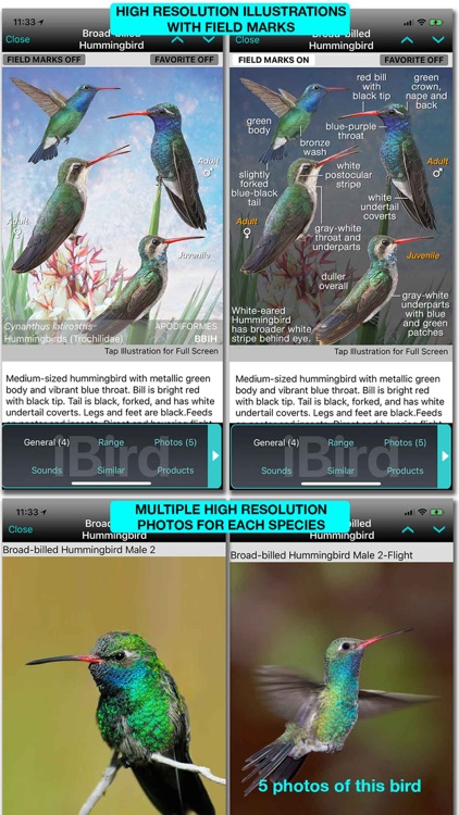 iBird Ultimate Guide to Birds screenshot-9