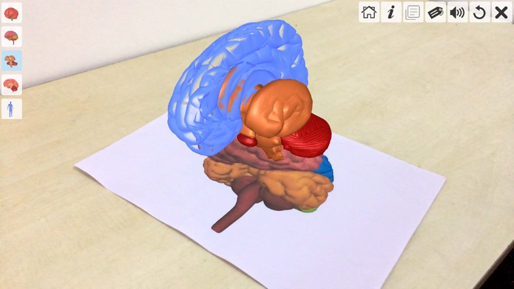AR Human brain screenshot-4