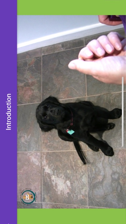 Basic Dog Training screenshot-3