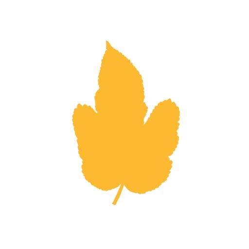 Acacia Church App icon
