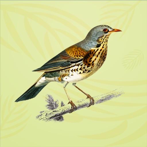 Vintage Bird Stickers
