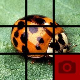Picture Tile Slider