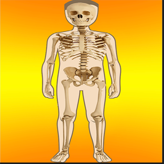 Kidz Learn Body Parts Basic and Internal on the App Store