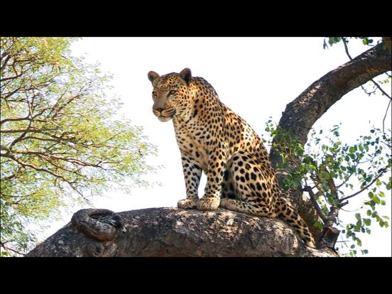 Video Touch - 野生の動物のおすすめ画像4