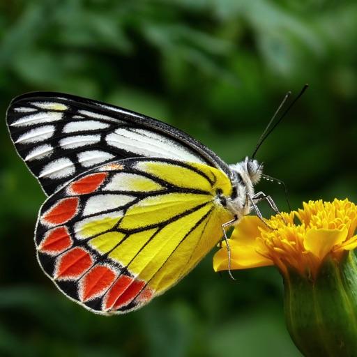 Butterflies 2.0