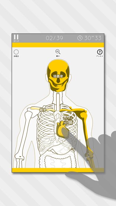 人体模型パズル