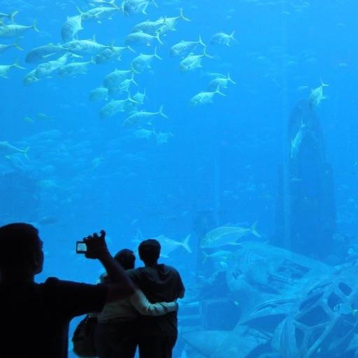 Aquarium Pack
