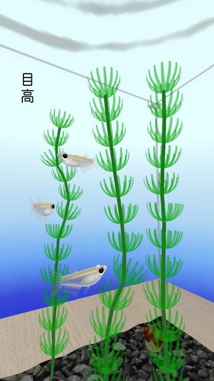 Rice Fish AR/VR screenshot-4