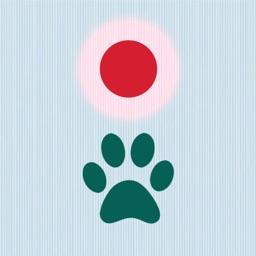 Cat Laser Game
