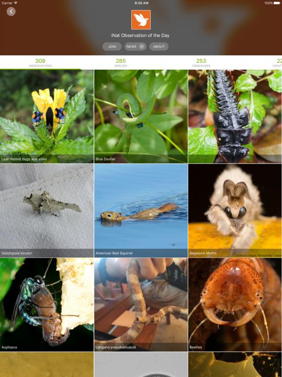 iNaturalistのおすすめ画像3