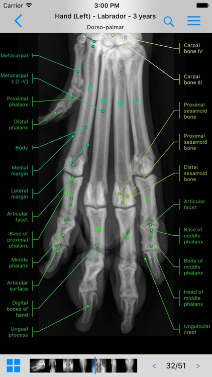 vet-Anatomy