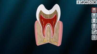 Incredible Human Teeth screenshot 3