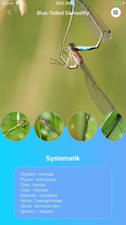 Dragonflies screenshot-3