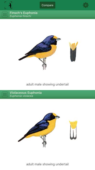 Birds of Brazil Screenshot 2