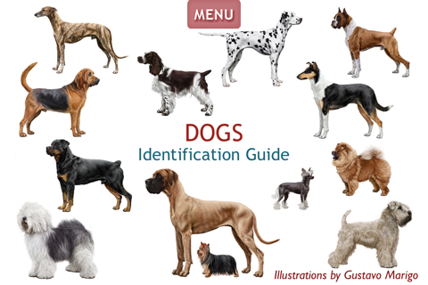 Dogs - Identification Guide - náhled