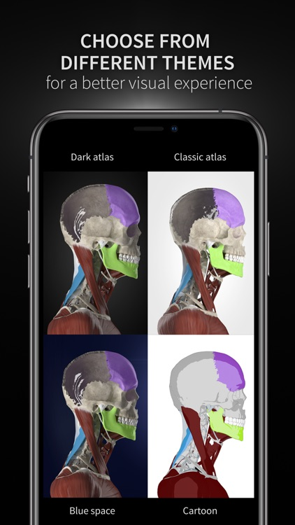 Anatomyka screenshot-9