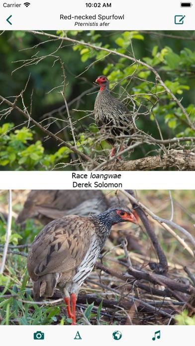 Birds of Zambia Screenshot