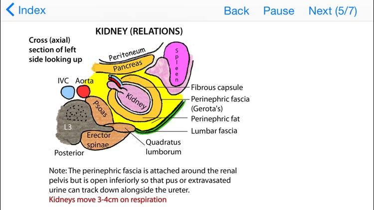 Tricky Areas of Anatomy screenshot-3