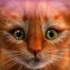我的小猫(猫模拟器)