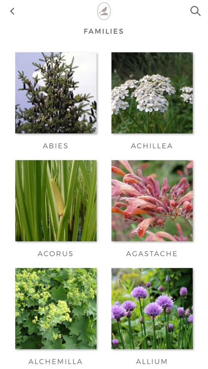 Fieldstone Guide: Herbs