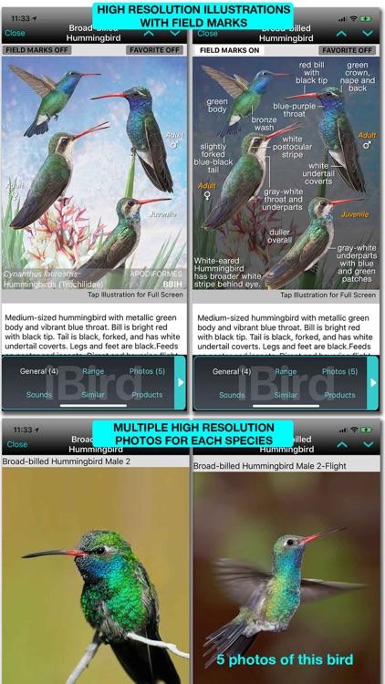 iBird Plus Guide to Birds screenshot-9