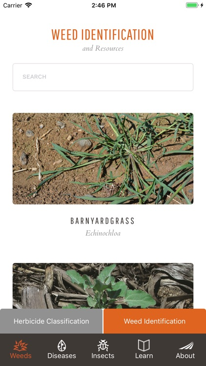 Take Action on Weeds