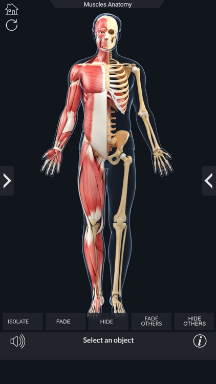 My Muscle Anatomy screenshot-7