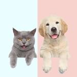 狗猫语翻译器 · 人猫交流器