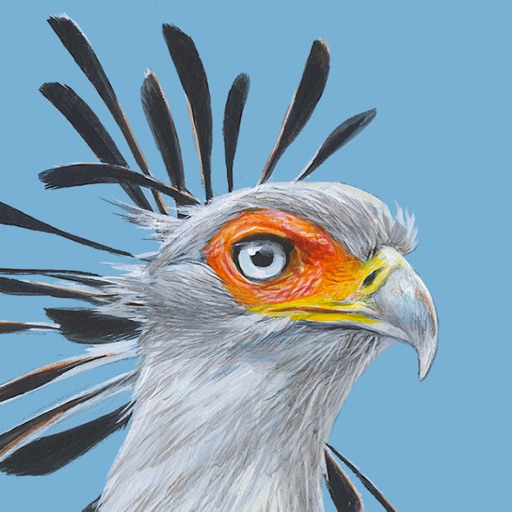 Roberts Bird Guide 2