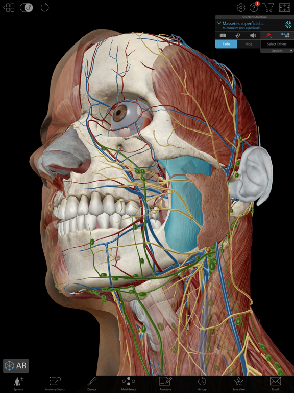 Human Anatomy Atlas 2019 Screenshots