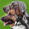 Dogs - Identification Guide - iPhoneアプリ